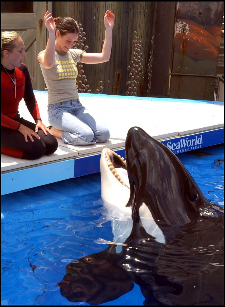 Actress Evangeline Lilly plays with a whale at SeaWorld Orlando in this May 2005 photo.