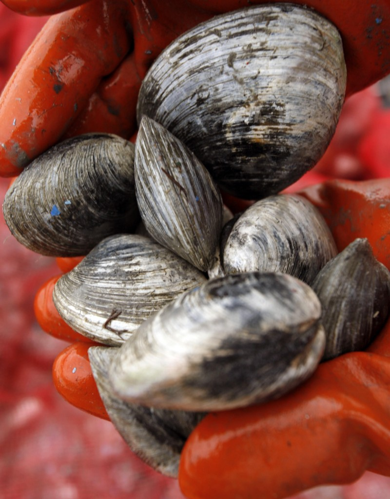 Clammers say red tide is less of an economic threat than shoreline pollution.