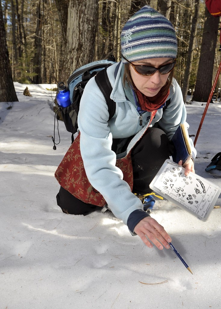 Environmental educator Bridie McGreavy points out significant clues as to what animal may have made a set of tracks.