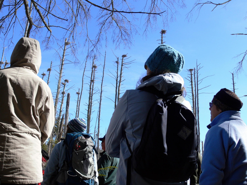 A walk led by the Lakes Environmental Association in Bridgton last week went to what is likely the largest inland heron rookery in Cumberland County.