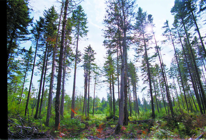 Trees rise from land in Township 12, Range 15 in northern Maine. The state has trees growing on 90 percent of its land base, or 17.8 million acres. About 95 percent of the timberland is privately owned, with small, non-industrial landowners holding more than 6.2 million acres. As an economic resource, Maine's forests directly employ nearly 23,000 people.