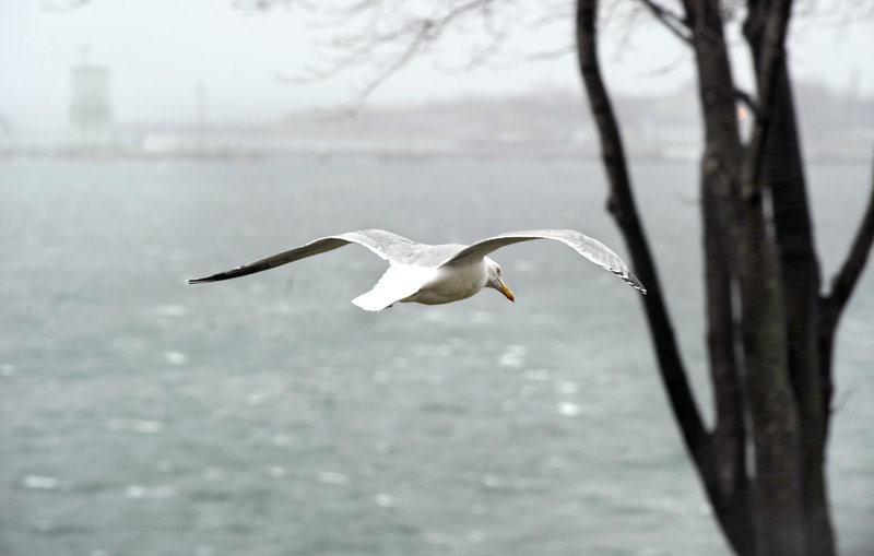A gull soars over whitecaps in Casco Bay as the wind produces rough seas on Monday.