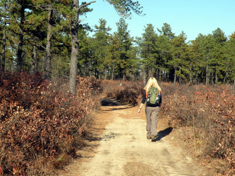 The Waterboro Barrens encompass the largest intact pitch pine-scrub oak forest in New England.