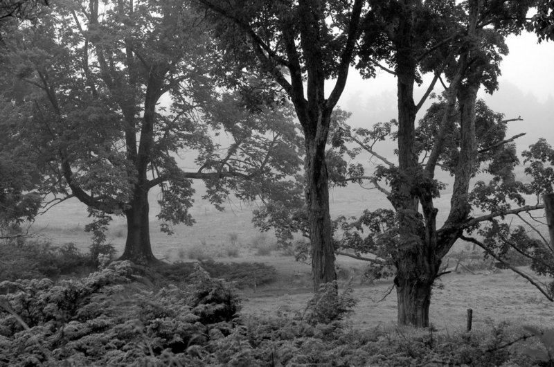 """Laura Lee Dobson''s black-and-white photograph """"""""Rocky Hill Road"""""""