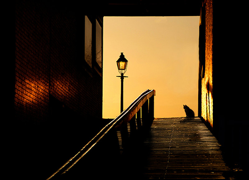 """""""Alley Cat"""" by Dick Butterer, from the Maine Photography Show in Boothbay Harbor."""