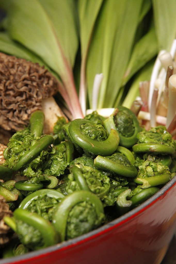 The appearance of fiddleheads in markets is a sure sign of spring.