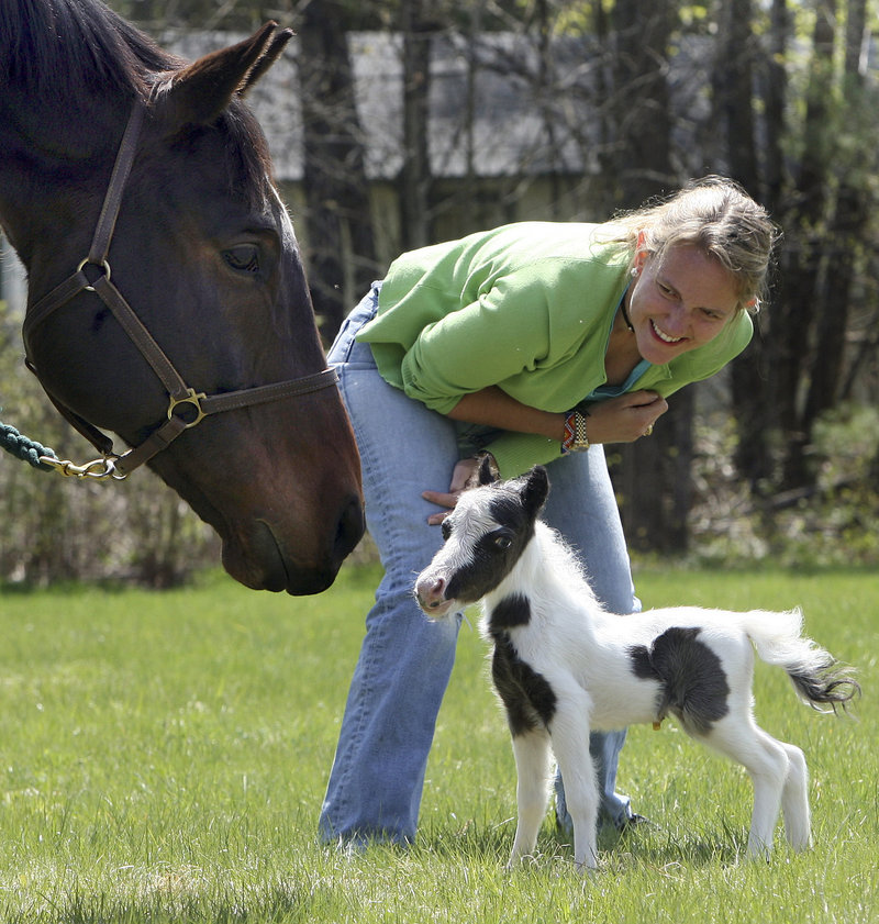 Dr. Rachel Wagner watches Sunday as her three-day-old pinto stallion Einstein meets a full-sized horse in Barnstead, N.H. Einstein, who weighed 6 pounds at birth, could lay claim to the world record for lightweight foal – listed as 9 pounds in the Guinness Book of Records.