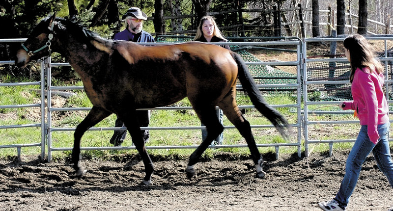 Danya Bent watches a horse during a round-penning exercise at Albertson's Quarter Horse farm in Madison as Kurt Keschl, a homeless man who is learning how to care for and ride horses, speaks with trainer Meagan Simard outside the riding ring.