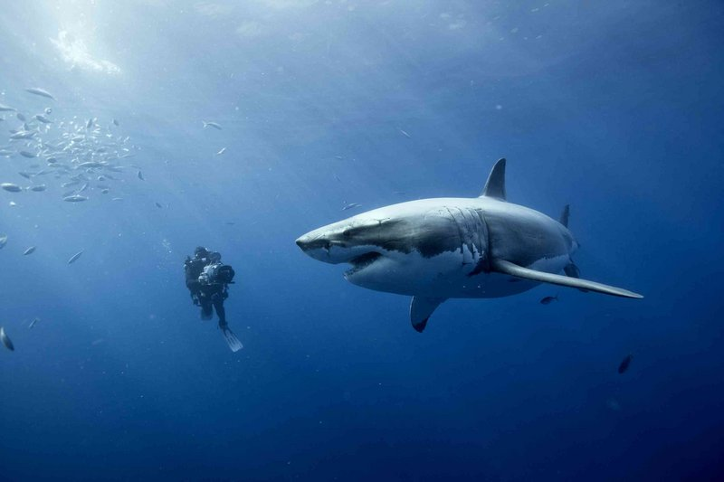 """One of the unexpected pleasures of """"Oceans"""" is the footage that shows the film's camera people working far under the surface."""