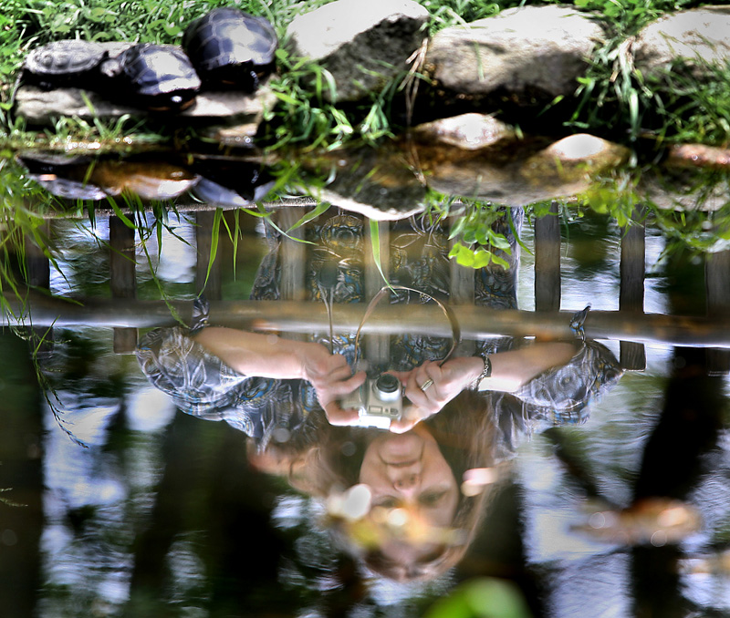 Sherry Putnam of Cape Elizabeth is reflected in the turtle pond as she photographs several painted turtles.