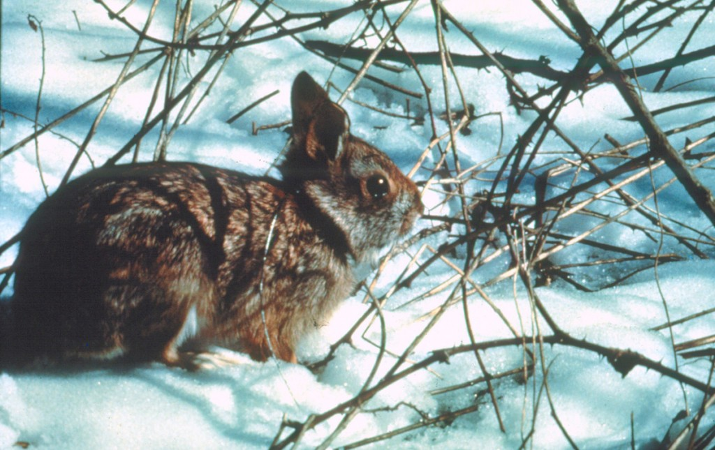 The 40-acre property includes a habitat restoration project for the endangered New England cottontail rabbit.