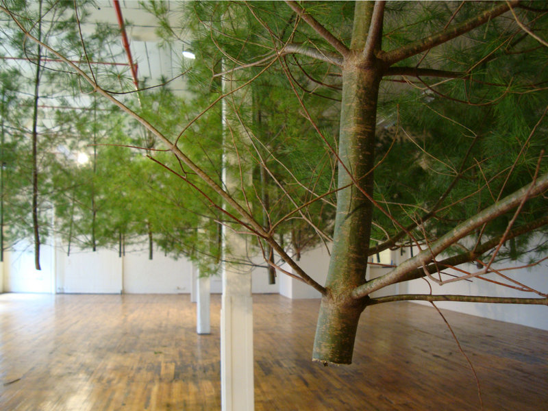 "Now showing at the Coleman Burke Gallery in Brunswick is ""Timbered (pitch),"" an installation by Jacob Galle."