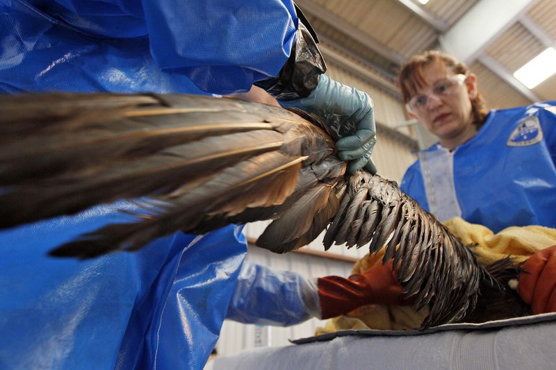 Dr. Erica Miller, left, and Danene Birtell of Tri-State Bird Rescue and Research work to help an oil-covered Northern Gannet. The bird is normally white when full grown.