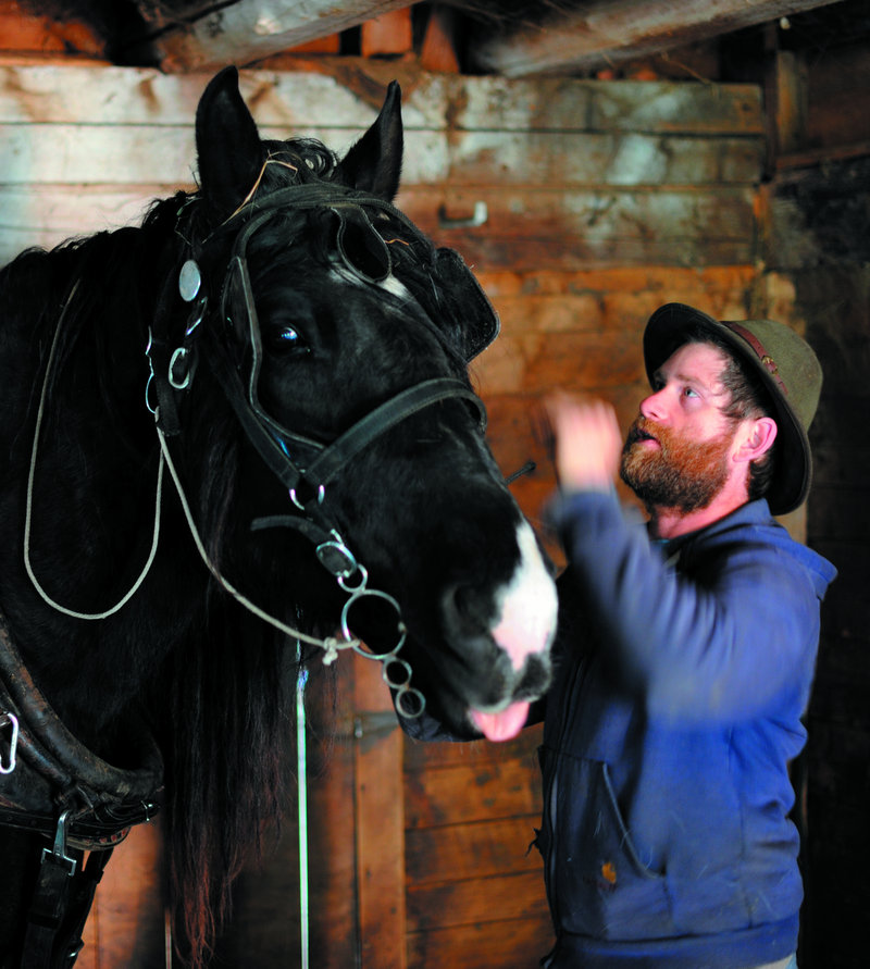 Sam Hazlehurst harnesses his Percheron gelding Tonka for a day of work at Smith Farm in Troy.