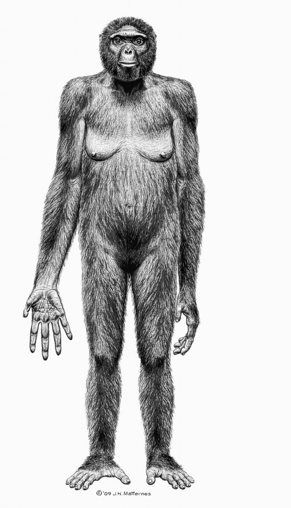"""Artist's rendering provided by the journal Science shows the probable appearance of Ardipithecus ramidus, also known as """"Ardi."""""""