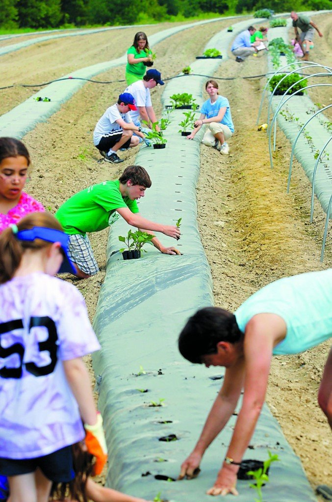 The Food for Families garden project in York is in its third year and has produced more than 7,000 pounds of produce.