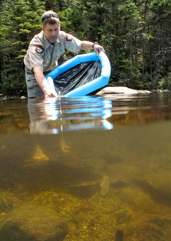 Greg Bell, who used a blow-up kiddie pool as a makeshift holding tank and carefully monitored the water temperature as it warmed, releases hatchery-raised fish into the pond.