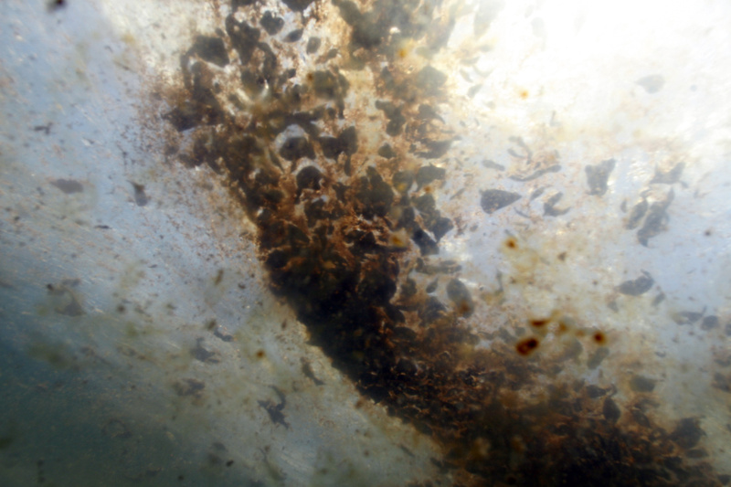 Patches of oil from the Deepwater Horizon spill are seen from an underwater vantage on Monday in the Gulf of Mexico south of Venice, La. Letter writers weigh in on the catastrophe.