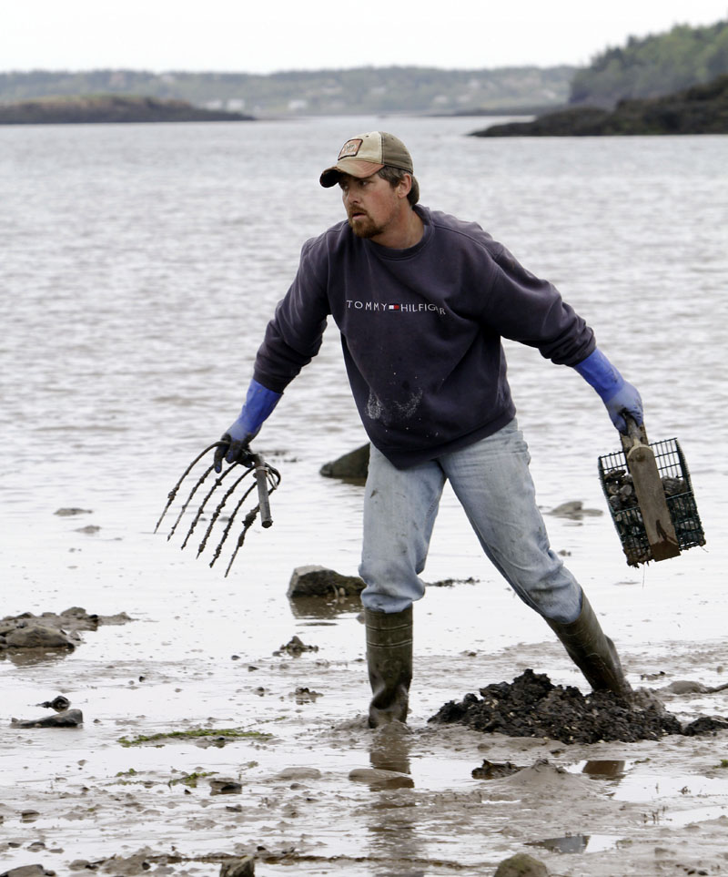 Clammer David Case makes his way along the mud flats searching for a new spot to dig in Lubec.