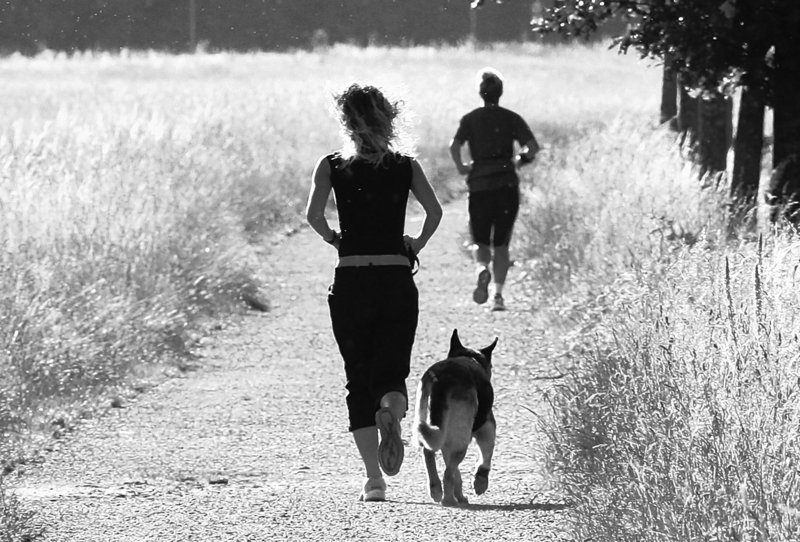 A team of researchers has found that people who were more fit – as measured by oxygen intake during exercise – appeared to be burning more fat than the less fit, or than people with shortness of breath, a possible symptom of heart disease.