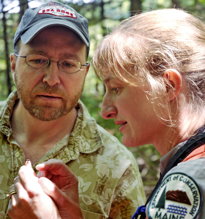 Forest entomologist Allison Kanoti and Portland Press Herald reporter Ray Routhier examine a bug while searching for hemlock woolly adelgid in Harpswell.