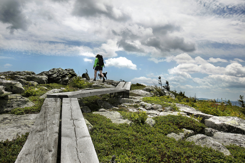 Parts of the Grafton Loop Trail that goes over Sunday River Whitecap are raised walkways designed to protect the fragile Alpine vegetation.