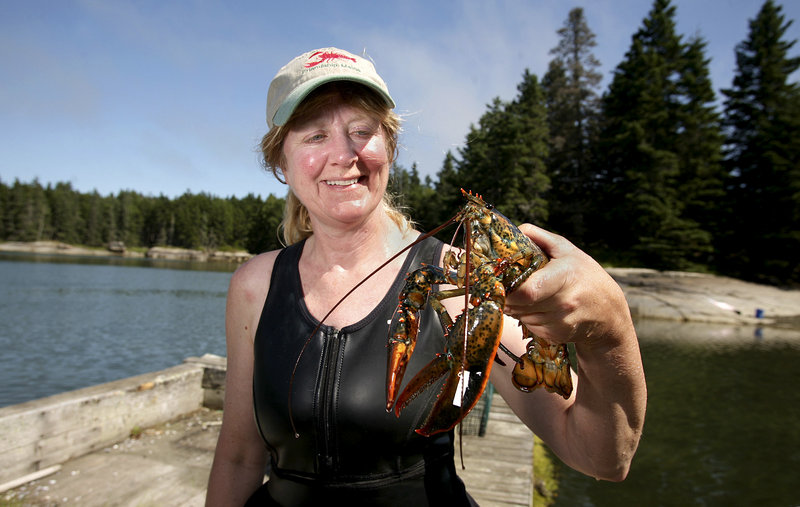 Diane Cowan, executive director of the Lobster Conservancy, inspects a lobster at the lobster pound at the Lobster Conservancy on Friendship Long Island.