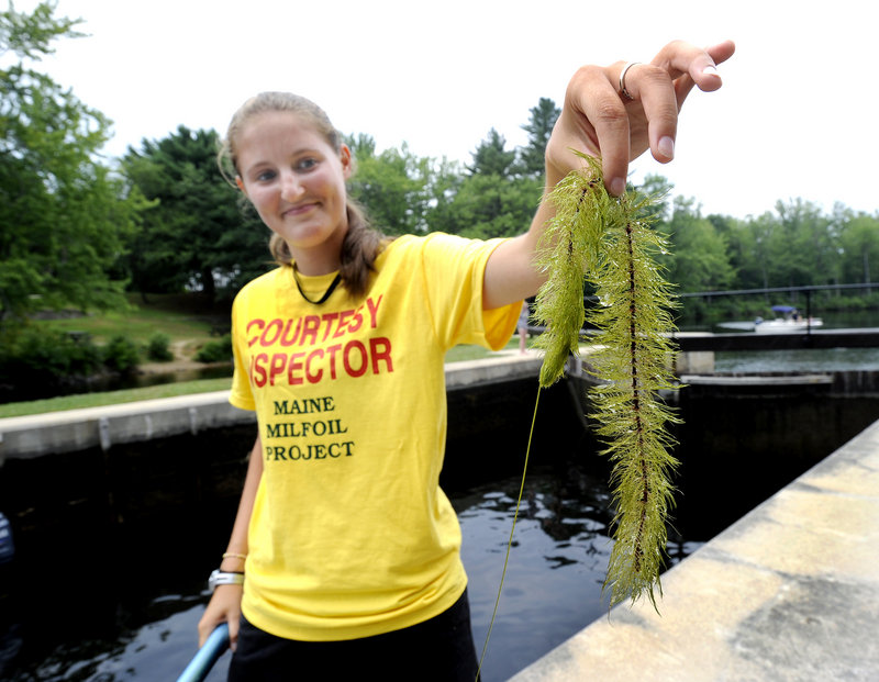 Kelly Baldwin serves as an inspector for the Lakes Environmental Association, monitoring boats for invasive aquatic plants as they pass through the Songo Locks in Naples. She's holding milfoil, an unwanted weed that has been pushing into boating lanes in the Songo River and lower Sebago Lake because of ideal growing conditions.�