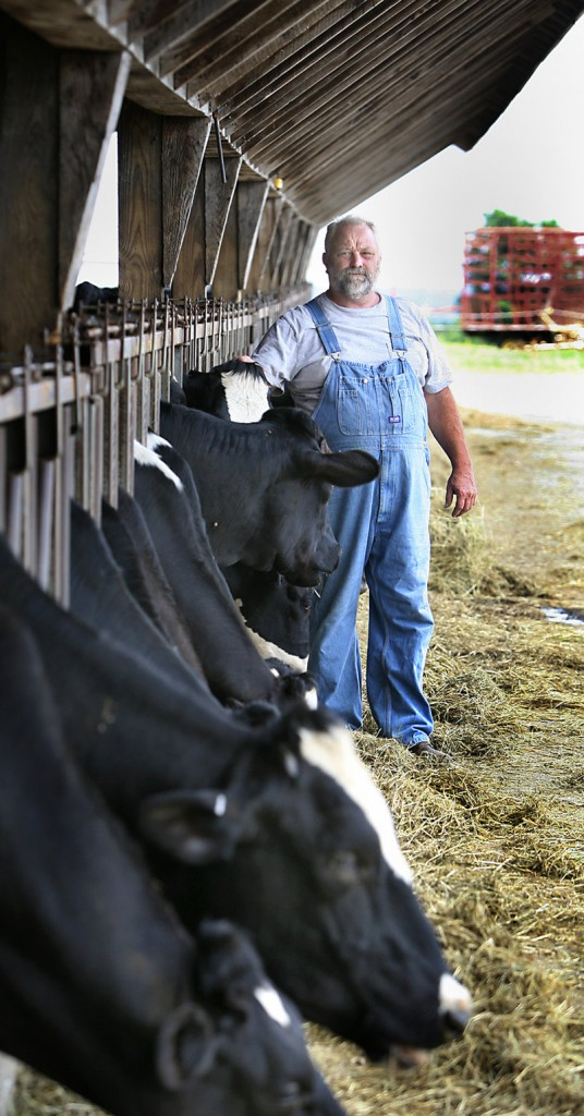 A livestock-shipping permit for Eastport would also benefit dairy farmers like Jay Roebuck, seen here with his Holstein heifers at his farm in Turner on Wednesday. Cattle shipped overseas from Eastport last week spent a 12-hour quarantine period at his farm.