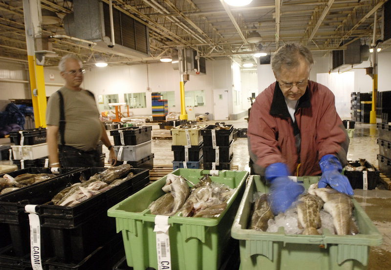 Mike Twiss of Ad-Jon, a fish processing company, looks over the fish before the auction at the Portland Fish Exchange.