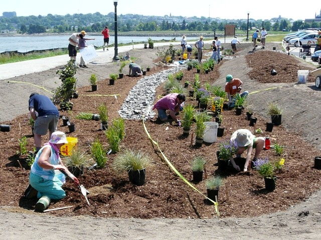 Volunteers and city workers plant Portland's new rain garden by the Back Cove parking lot recently. It will help combat water pollution.