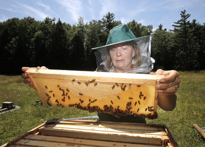 Erin Forbes keeps about 70 hives in Portland and Falmouth, comprising about 4.2 million bees.