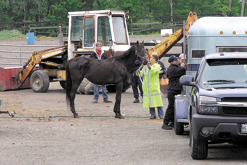 Brett Ingraham, owner of Fair Play Farm in Clinton, watches June 3 as state animal welfare agents seize horses from his farm. Ingraham now faces charges of animal cruelty in connection with the horse farm.