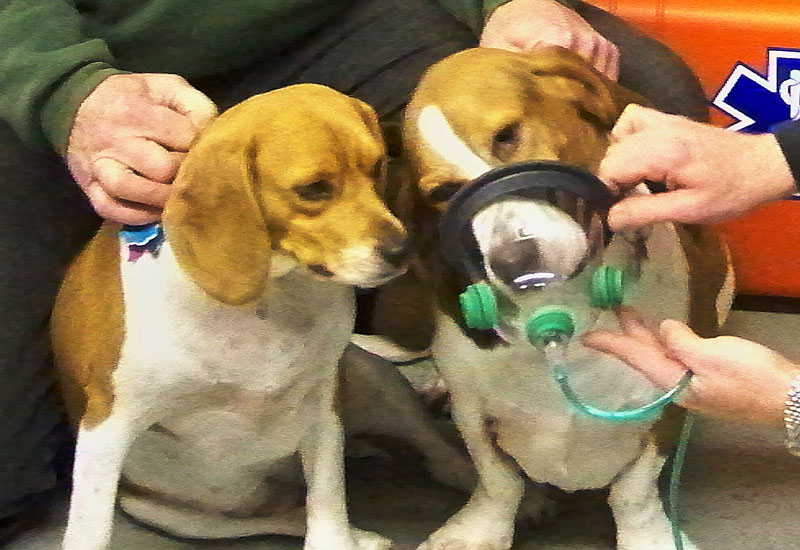 The masks are designed to fit dogs and cats, and come in a variety of sizes.
