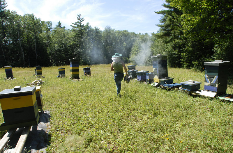 Erin Forbes uses smoke to calm her bees when opening hives.