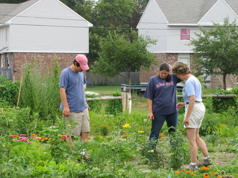 Amy Witt, right, a horticulturist with the University of Maine Cooperative Extension Service, helps Jessica Villandry and Jonathan Mildrum of Community Partners, in their garden plot. The City of Portland offers the community garden space to individuals and nonprofits on a first-come, first-served basis.