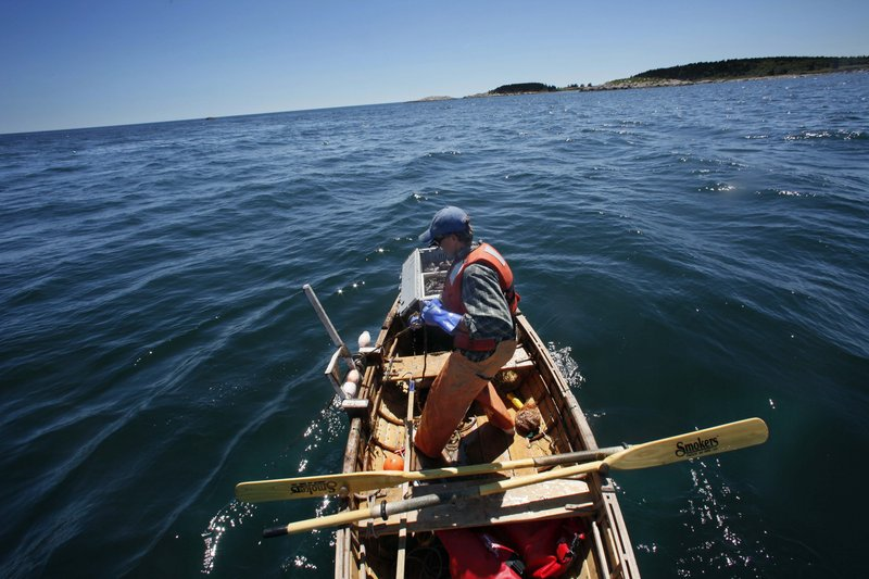 """Nat Hussey hauls a lobster trap while fishing off Matinicus Island. He hauls as many as 75 traps a day from his rowboat. """"It's the hardest work I've ever done,"""" he says."""