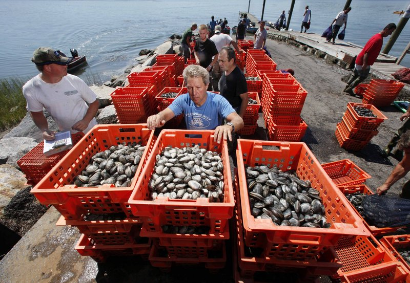 Clam digger Joe Delano, center, loads his clams onto a dealer's truck in Freeport.