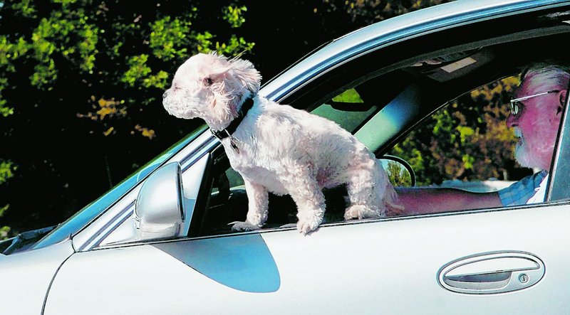 About two-thirds of dog owners surveyed by AAA say they routinely drive while petting or playing with their dogs, sometimes even giving them food or water.