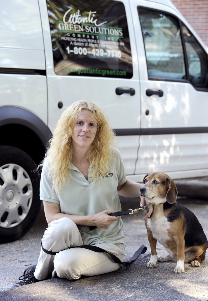 Deirdre Strout and beagle Cassie, working for Atlantic Pest Solutions, had 25 inspection appointments in Portland on Monday to root out bedbugs. Dogs can find living bugs or eggs in far less time than humans can.