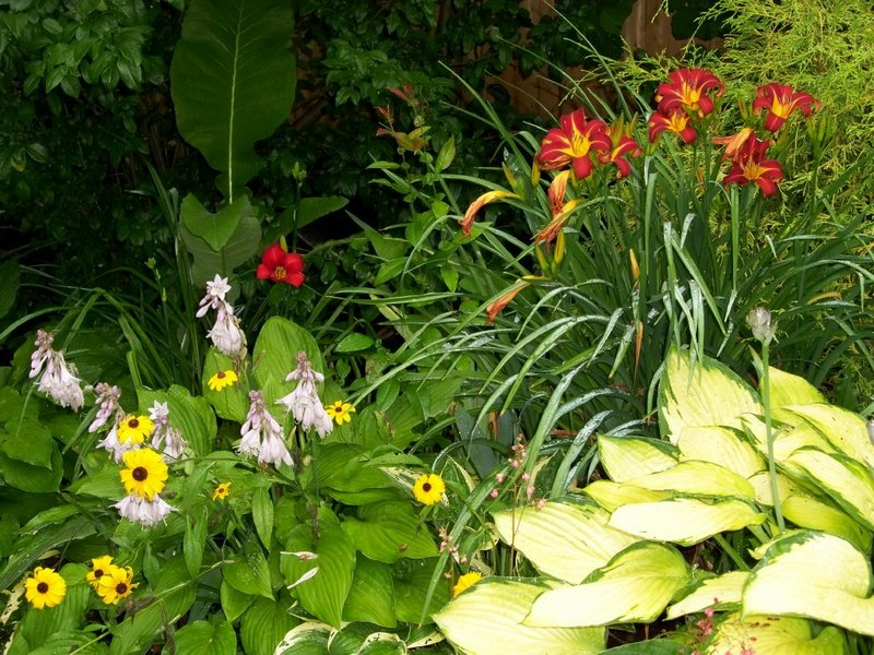 Red day lilies, rudbeckia and hosta.