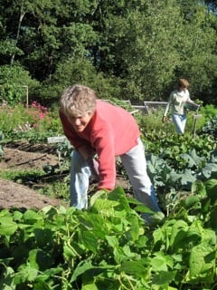 Joy Ahrens, plot coordinator, works in the garden.