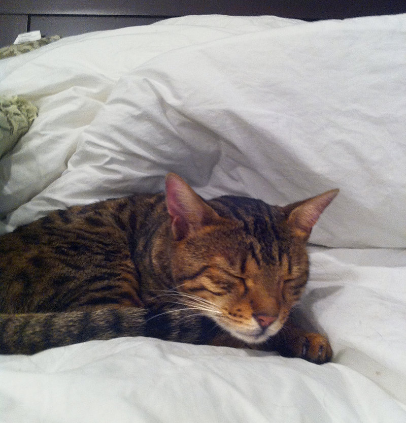 A reader salutes a Cumberland family's successful search for their cat, Kaden.