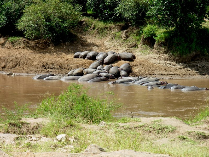 """Rick Peterson's """"Hippos in the Mara River (Congo),"""" at UNE's Art Gallery."""
