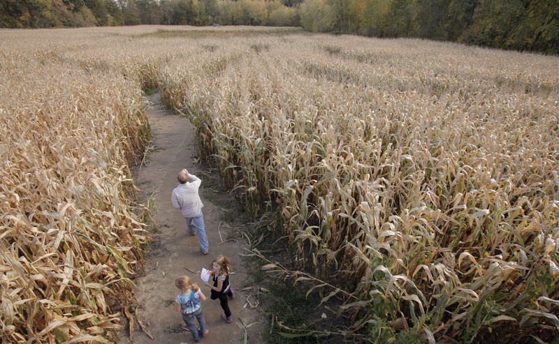 Visitors explore the corn maze at Pumpkin Valley Farm in Dayton on Monday. It's the ninth year that the farm has built a maze and owner Keith Harris says people tell him this one is the toughest to navigate yet.