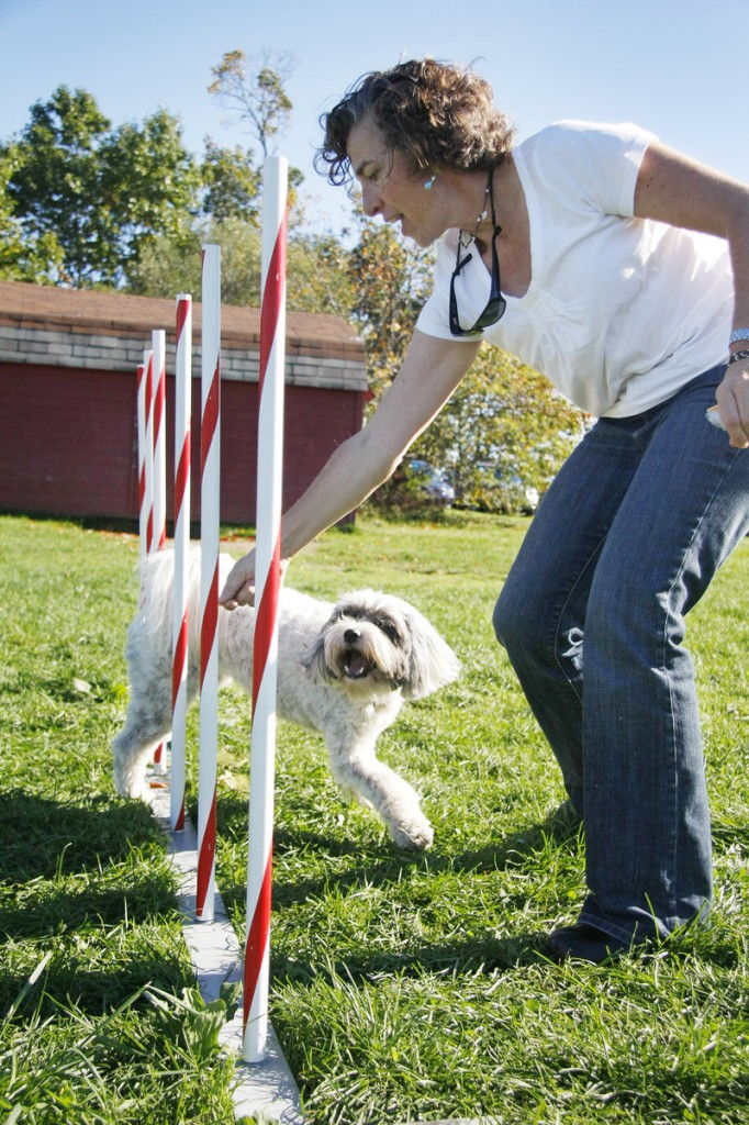 Mary Dougherty of South Portland teaches her Tibetan terrier, Nellie, 4, to run through the weave poles.