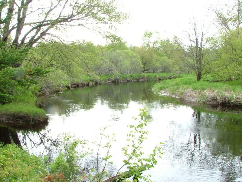 Join Georges River Land Trust for a nature walk along the St. George River in the Appleton Preserve from 10 a.m. to noon Thursday. The 124-acre preserve, on Route 105 in Appleton a quarter mile south of the intersection with Route 131, features a diversity of wildlife habitat, from the river to forested uplands. The property is conserved because of public bond funds through the Land for Maine's Future program. For more information, go online to www.grlt.org or call 594-5166. Nature walk participants are asked to park in the lot maintained by the Department of Inland Fisheries and Wildlife at the St. George River bridge on Route 105.