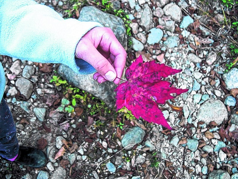 Fall hikes may spark questions about what kinds of trees the colorful leaves come from, and finding out can be an education for the whole family. Kids also enjoy bringing paper and crayons with the wrappers peeled off to make leaf rubbings.