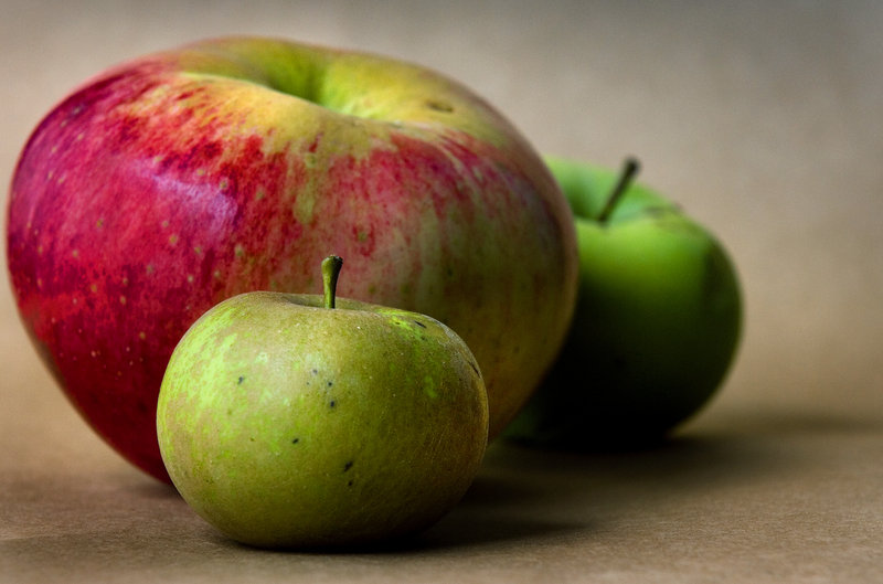 Some of the rare apples likely to be on display at the Great Maine Apple Day include the diminutive Pomme Grise apple in the foreground, the large Wolf River variety and the Tolman Sweet.