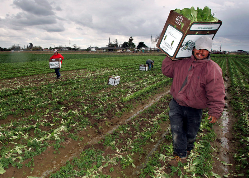 California workers carry boxes of bok choy out of a field. Foreign-born workers have seen wages decrease in the past year but the number of jobs have increased. Native-born workers are being paid the same but have lost jobs.